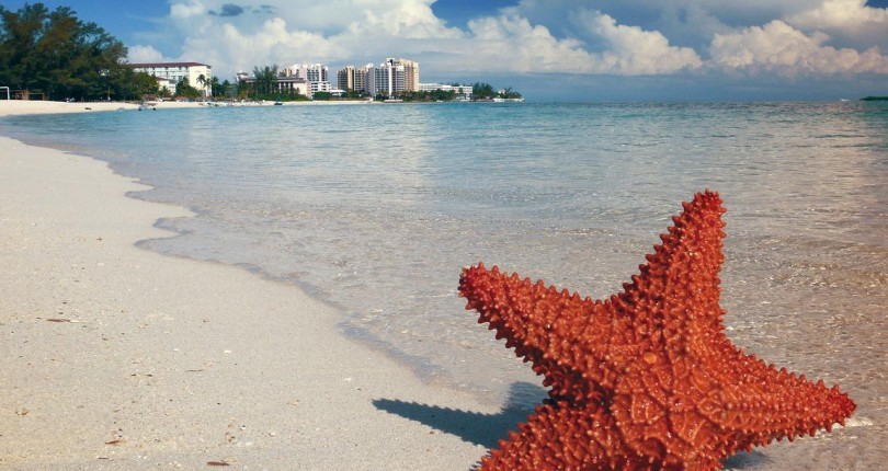 Starfish and Real Estate